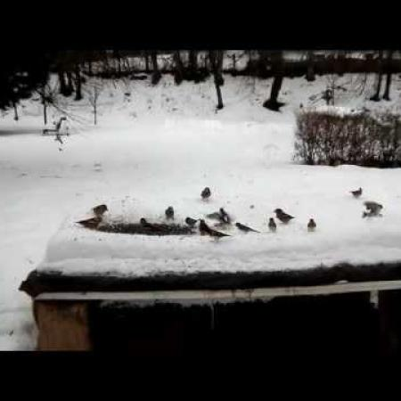 Akció a madárlesnél