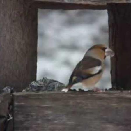 Téli madáretetés a Mindszenty Ifjúsági Ház parkjában 1.