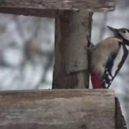 Téli madáretetés a Mindszenty Ifjúsági Ház parkjában 4.